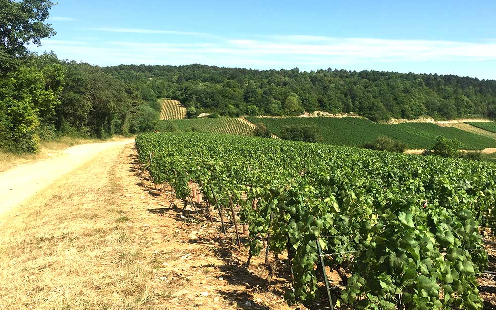 Burgundy's Vineyards
